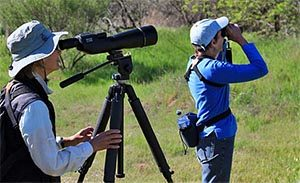 Bird Watching in the Verde Valley